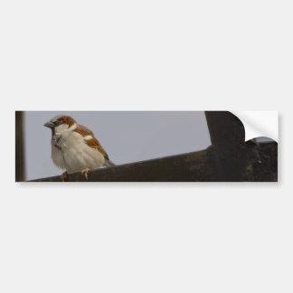 Sparrow Bumper Sticker