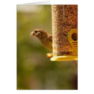 Sparrow eating card
