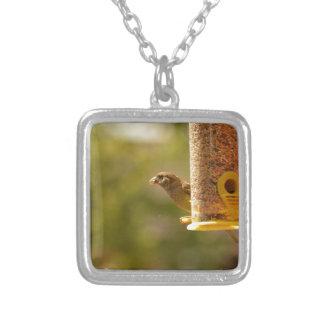 Sparrow eating pendants
