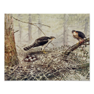 Sparrow Hawks Poster