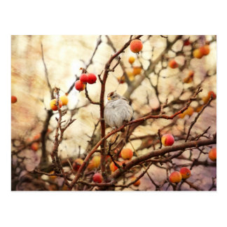 Sparrow in a Crab Apple Tree Post Card