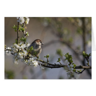 Sparrow in Blossom card by cARTerART