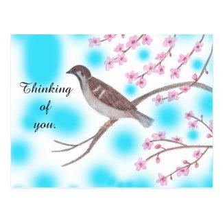 Sparrow in Cherry Blossom Tree Sky Postcards