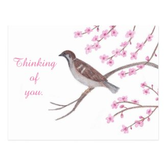 Sparrow in Cherry Blossom Tree Thinking Postcards