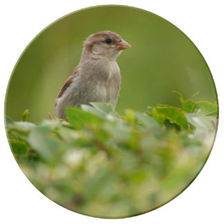 sparrow in green porcelain plates