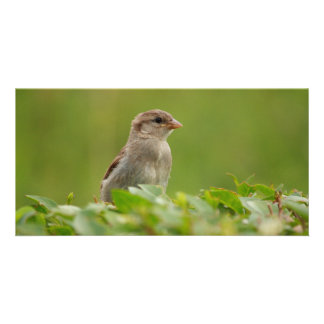 sparrow in green personalized photo card