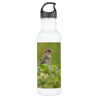 sparrow in green water bottle