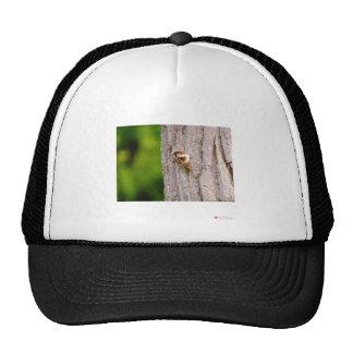 Sparrow In Oak Wildlife Photography Gifts & Tees Trucker Hat