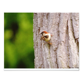 Sparrow In Oak Wildlife Photography Gifts & Tees 4.25x5.5 Paper Invitation Card
