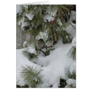 Sparrow In Snowy Evergreen Card