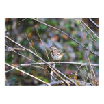 Sparrow in the Brush 2 5x7 Paper Invitation Card