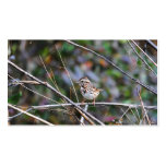Sparrow in the Brush 2 Double-Sided Standard Business Cards (Pack Of 100)