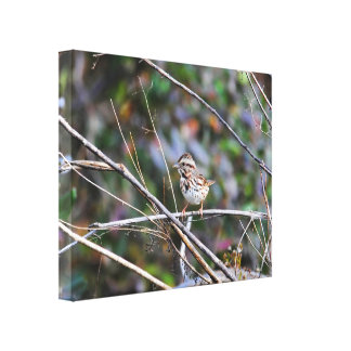 Sparrow in the Brush 2 Canvas Print