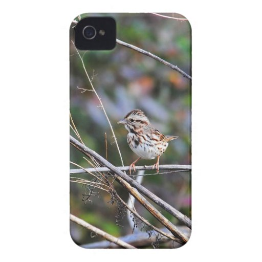 Sparrow in the Brush 2 iPhone 4 Case-Mate Cases