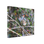 Sparrow in the Brush 2 Stretched Canvas Print