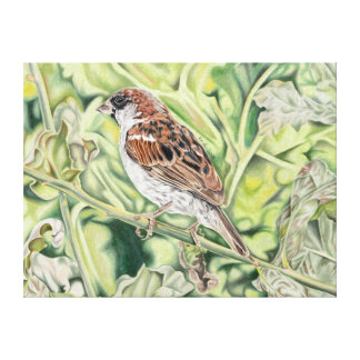 Sparrow in the country - coloured pencil design canvas print