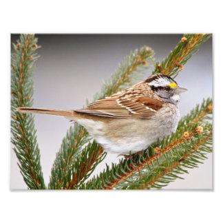 Sparrow in Winter Photo