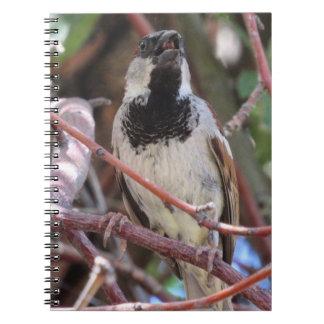Sparrow Notebook