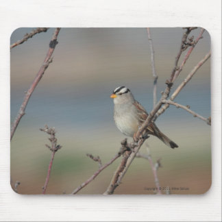 Sparrow on a branch Mousepad