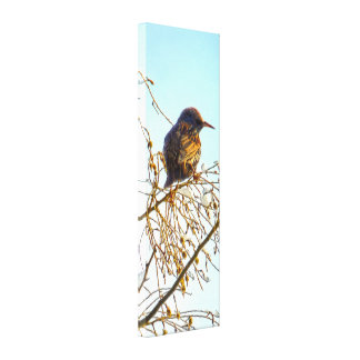 Sparrow on a Winter Branch Canvas Print