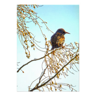Sparrow on a Winter Branch Card