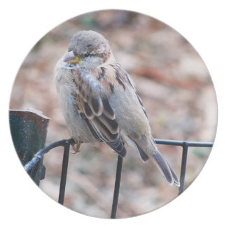 Sparrow on a wire fence melamine plate