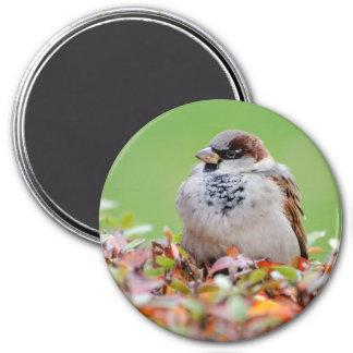 Sparrow on bush magnet