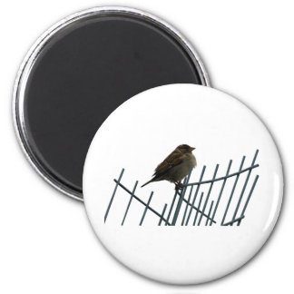 Sparrow on fence - photo 2 inch round magnet