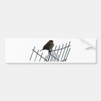 Sparrow on fence - photo bumper sticker