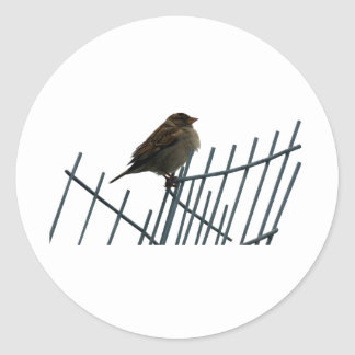Sparrow on fence - photo classic round sticker