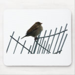 Sparrow on fence - photo mouse pad
