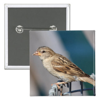 sparrow on the bin 2 inch square button