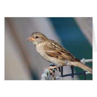 sparrow on the bin card