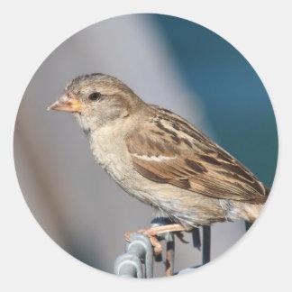 sparrow on the bin classic round sticker