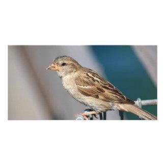 sparrow on the bin photo card