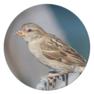 sparrow on the bin plate