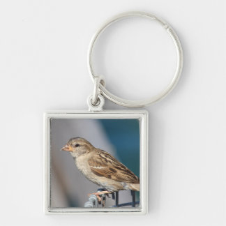 sparrow on the bin Silver-Colored square keychain