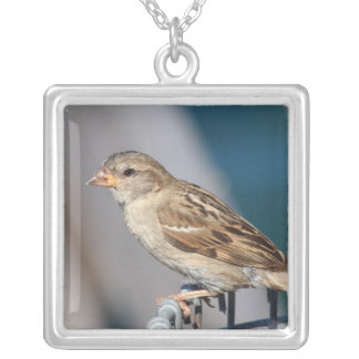 sparrow on the bin square pendant necklace