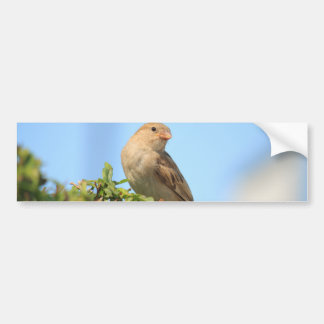 sparrow on the hedge bumper sticker