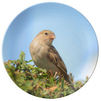 sparrow on the hedge porcelain plate
