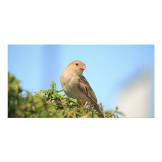 sparrow on the hedge personalized photo card