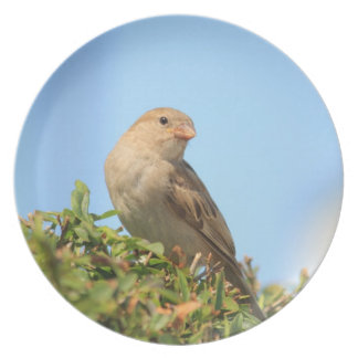 sparrow on the hedge party plate