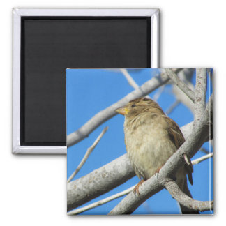 Sparrow on the tree magnet