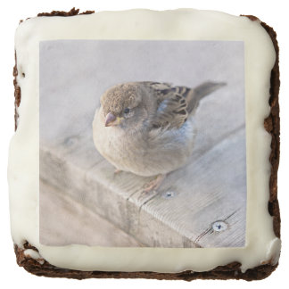 Sparrow - Overweight Chocolate Brownie