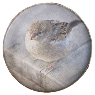 Sparrow - Overweight Chocolate Covered Oreo