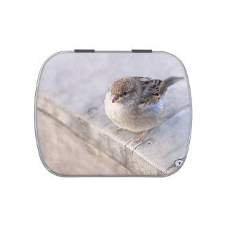 Sparrow - Overweight Jelly Belly Tin