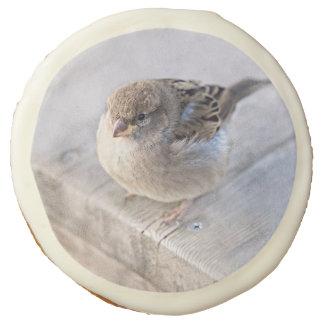 Sparrow - Overweight Sugar Cookie
