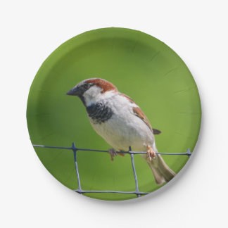 Sparrow Paper Plate