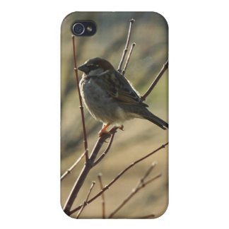 Sparrow Personalized Speck iPhone 4 Case