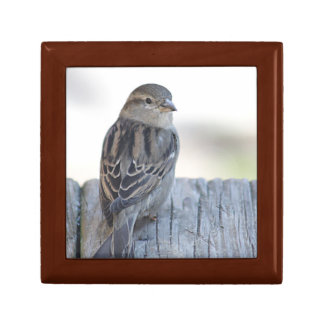 Sparrow photo keepsake box
